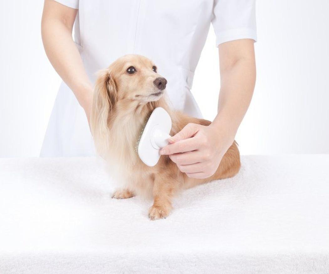 Cortes de pelo para perros según la raza (II)