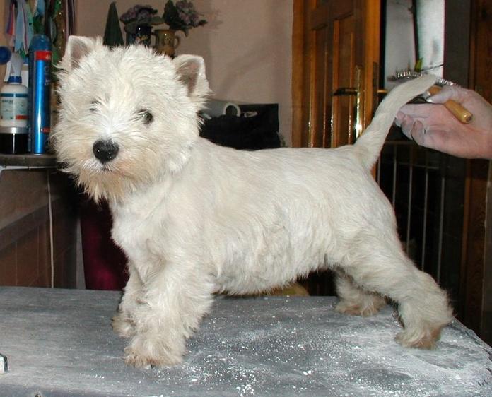 Peluquería canina: Catálogo de Clínica Veterinaria Campo de Níjar