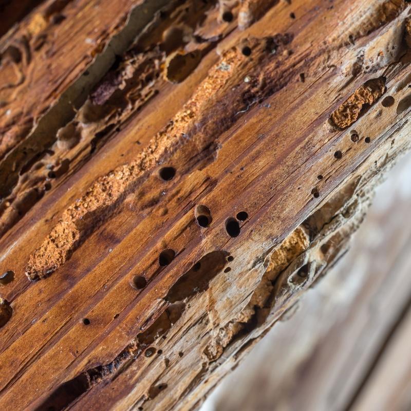 Tractaments de la fusta: Control de plagues de Atecma Barcelona