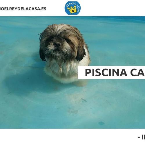 Hotel canino en Alicante | Hotel Canino El Rey de la Casa
