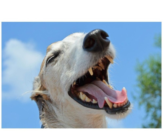 Salud dental: Especialidades y Servicios de Centro Veterinario Don Can