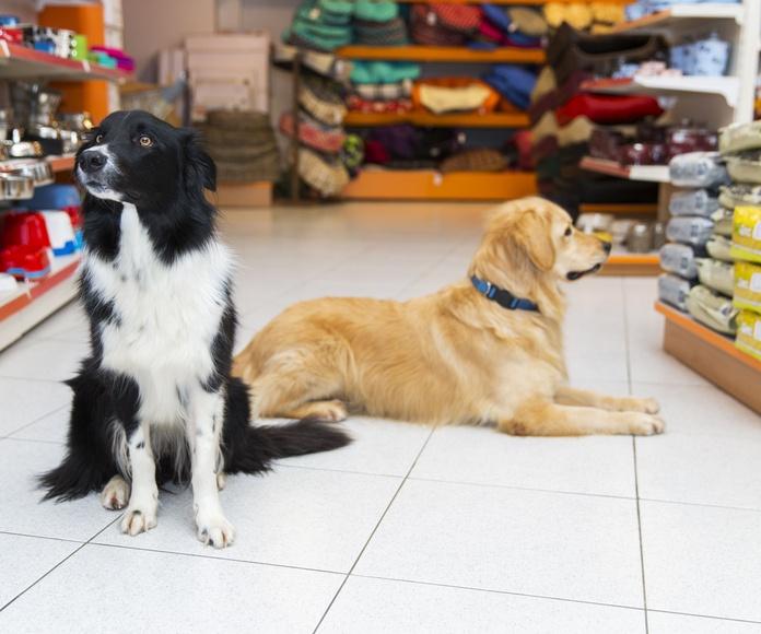 Alimentación para mascotas: Productos y servicios de Floristería Miranda
