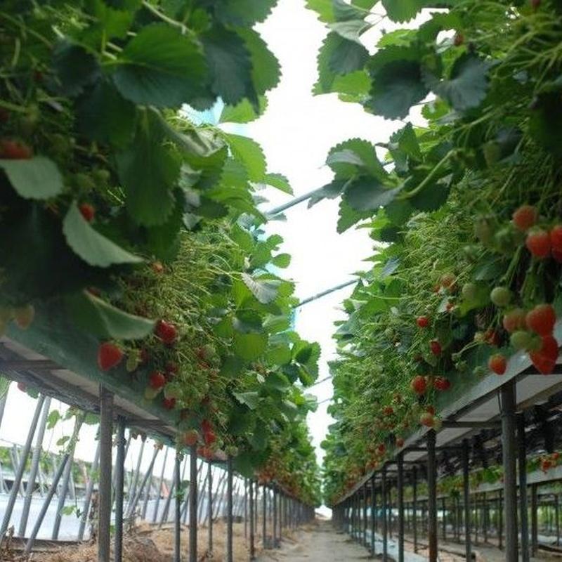 Agricultura: Tratamiento de aguas de SOB Distribuidores