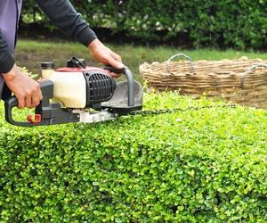 Pequeños trabajos de jardinería en Madrid