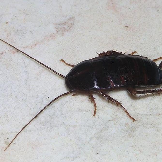 Consejos para evitar la aparición de cucarachas
