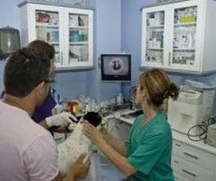 Diagnóstico por imagen