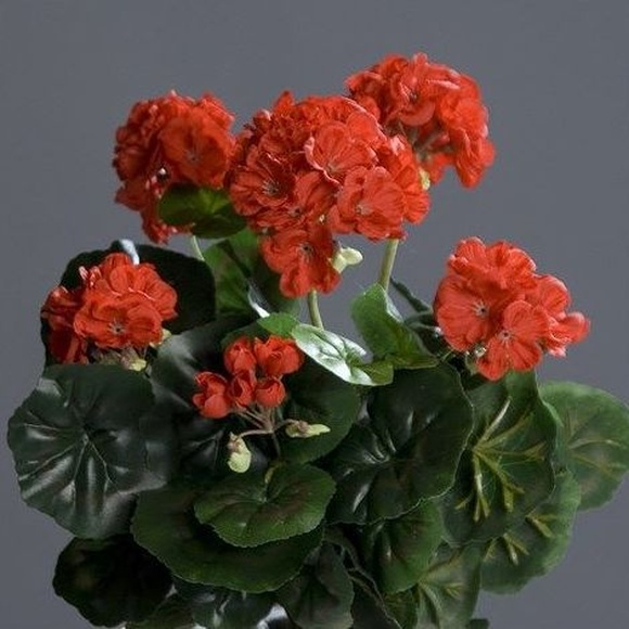 Plantas colgantes con flor: CATÁLOGO de Fernando Gallego, S.C.P.