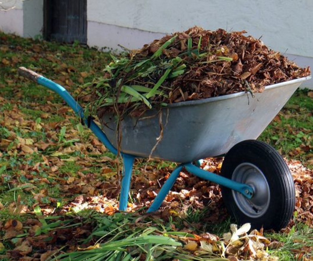 Cuidados de tu jardín en otoño