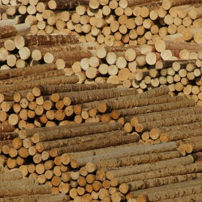 ¿Sabes qué son los pellets de biomasa?