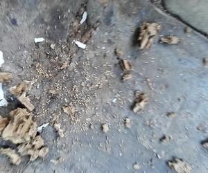 Eliminar Termitas en Valencia