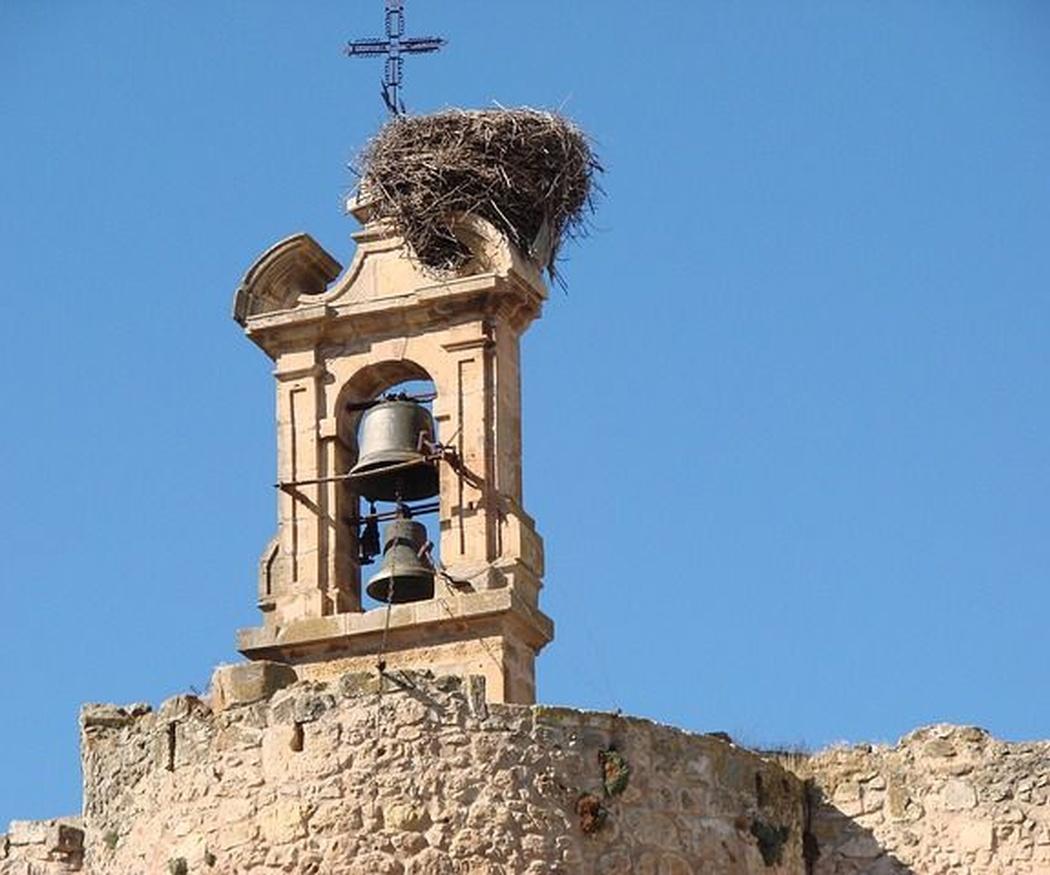 Cómo evitar los excrementos de aves en tu campana