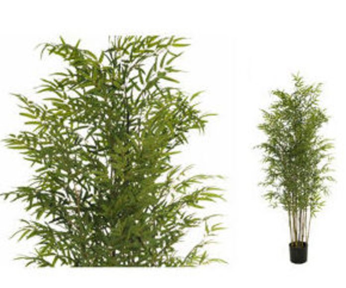 Árbol bambú japonés x2080  150cm