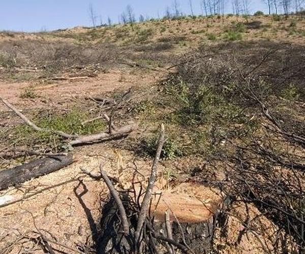 Recuperación de bosques