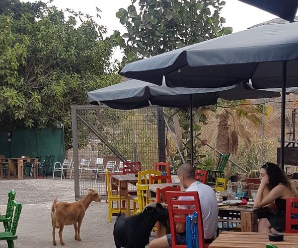 Guachinches recomendados en Tenerife | La Cueva de Chichio
