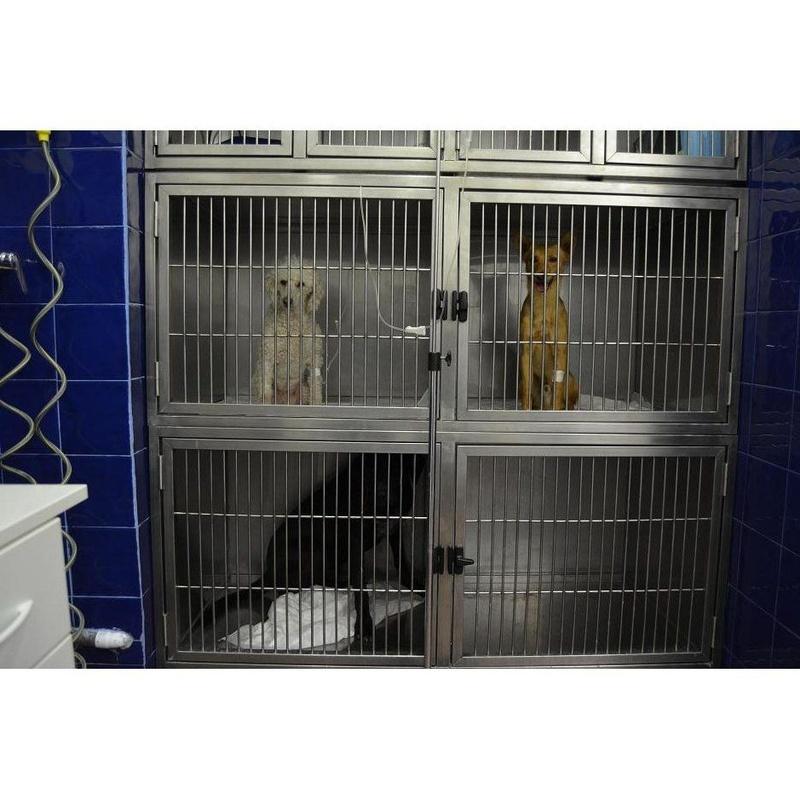 Salas para Ingresos: Especialidades de Clínica Veterinaria Reus