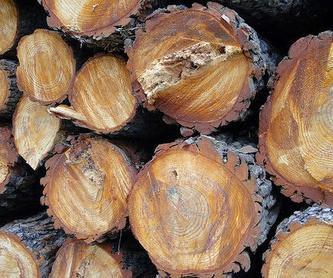 Vigas y puntones de madera: Catálogo de Maderas Rodríguez Dabouza, S.L.