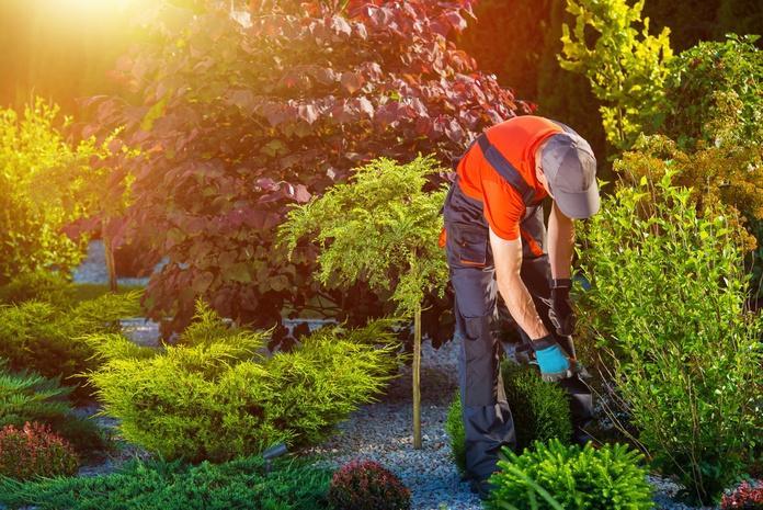Piscinas, parques y jardines: Servicios de TDR