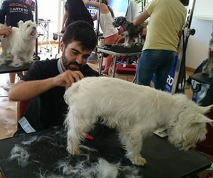 Peluquería canina en Castellón