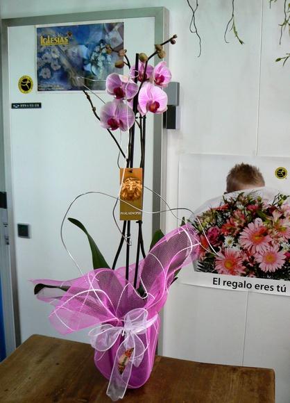 Orquidea preparada: CATÁLOGO de Floristería Iglesias