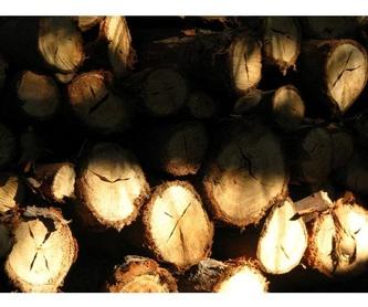Embalaje : Aserradero de madera  de Serrería Barren-Zelai, S.L.