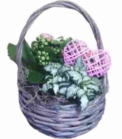 Cesta planta: Catálogo de Regalos de Floresdalia.com