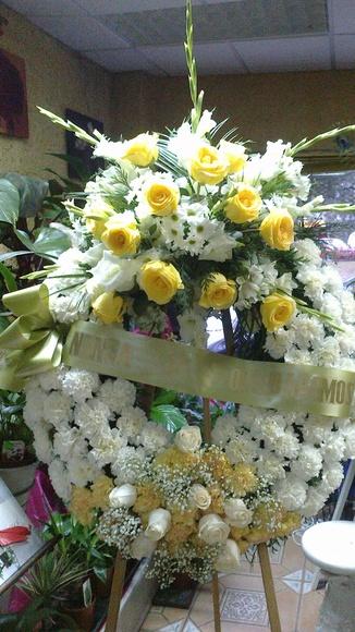 Funerales: Catálogo de Flores Maranta