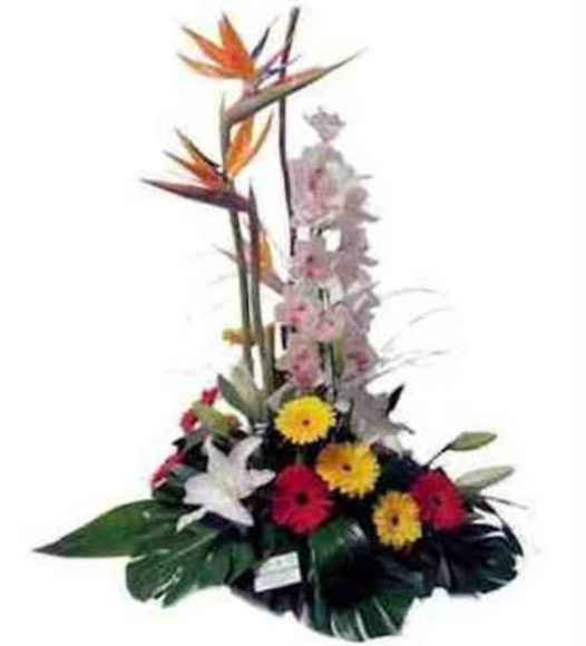 Arreglo floral tropical: Catálogo de Regalos de Floresdalia.com