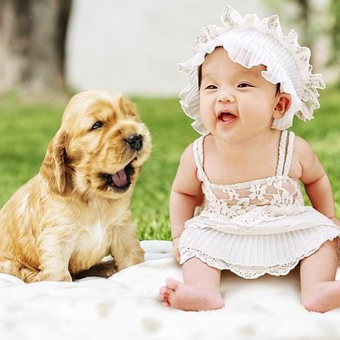 Cómo preparar a nuestro perro para la llegada de un bebé
