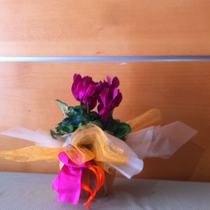 Plantas: Servicios de Floristería Lola