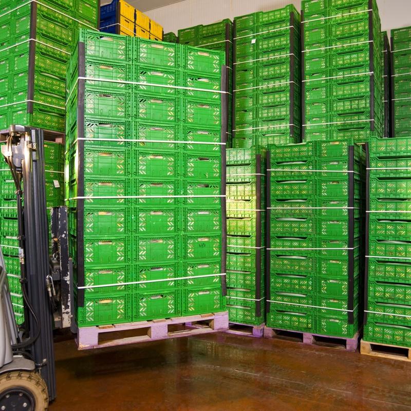 Venta a empresas: Catálogo de Frutas Rosán