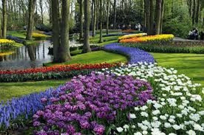 Mantenimiento de jardines: Servicios de Garden Home Mallorca