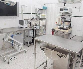 Hospital : Servicios de Centro Veterinario Sur