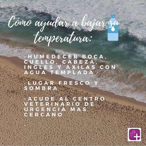 Urgencias veterinarias en Valencia