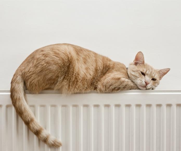 Calefacción: Servicios de Coordigrem