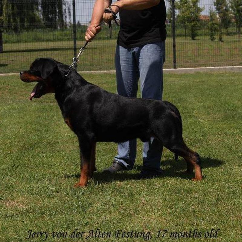 Machos: Servicios y accesorios de Residencia Canina y Adiestramiento Tarazona