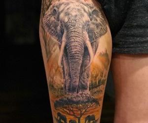 Tatuaje realista Santander. Tatuaje a color. Elefante tattoo. Verger Tattoo. JR Verger