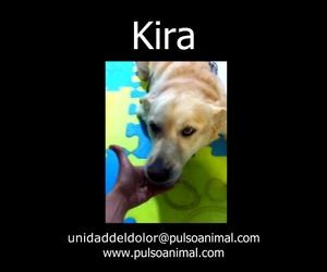 Rehabilitación canina en Madrid norte | Pulso Animal