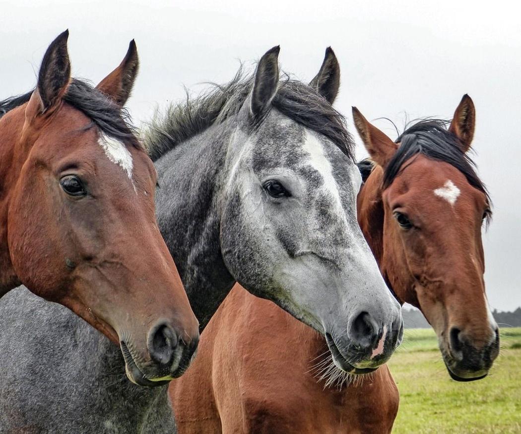 Cómo ayudan los caballos a las personas con autismo