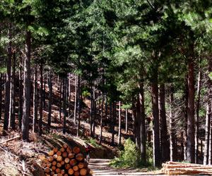 Galería de Maderas en Bollullos Par del Condado | Explotaciones Forestales Lagarcía, S.L.L.