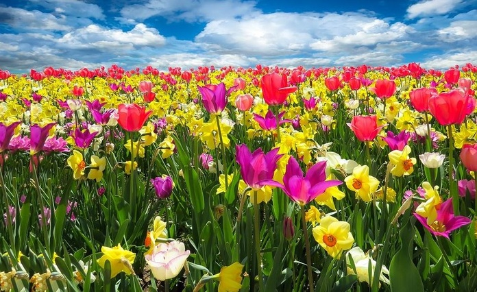 Adelgazar en primavera