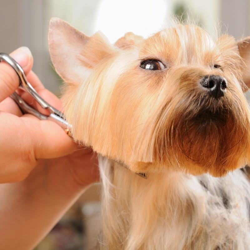 Corte: Servicios de Beauty Dog Spa