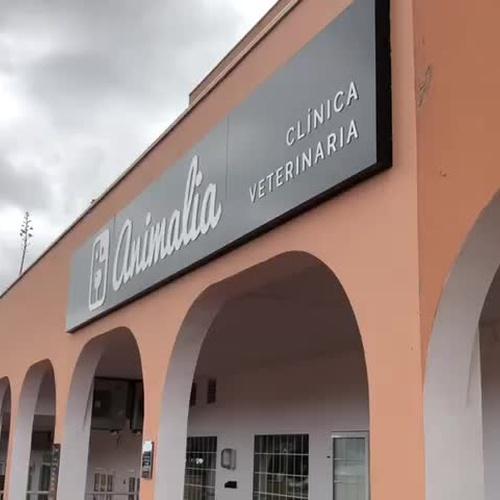 Clínica veterinaria Tenerife sur | Clínica Veterinaria Animalia