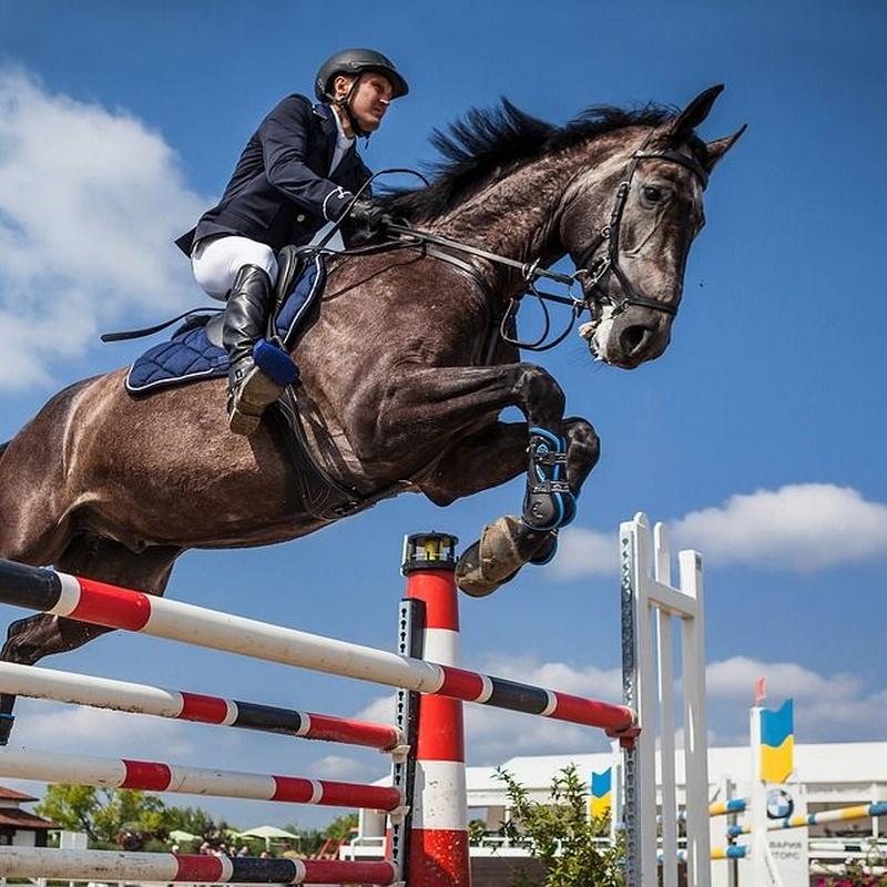 Jumping courses: Services de Equestrian Club El Alamo