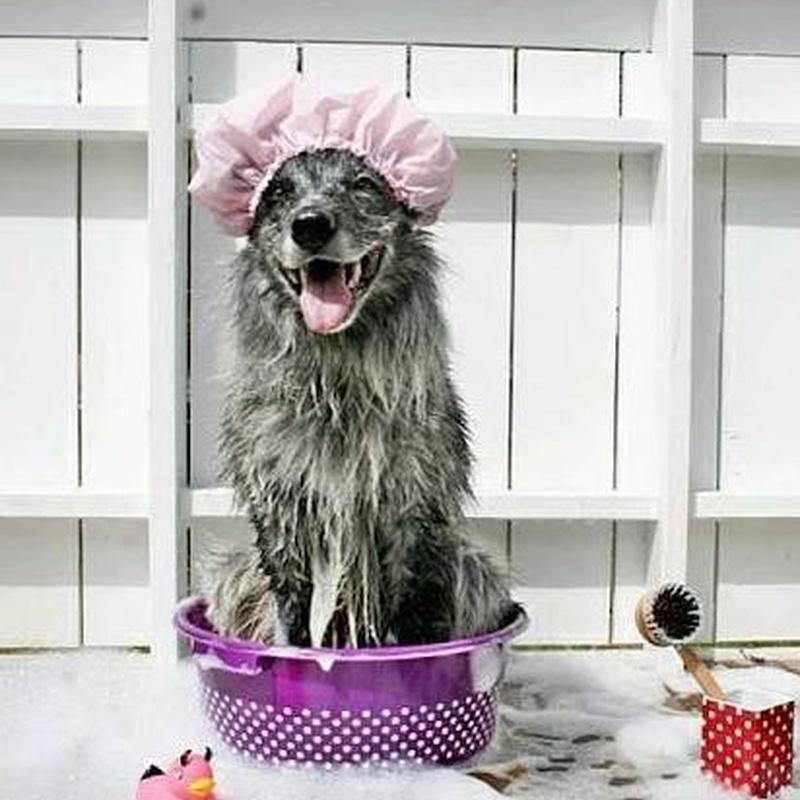 Baño: Servicios de Pets-&-Us