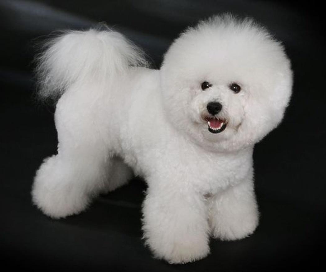 La peluquería en los cachorros
