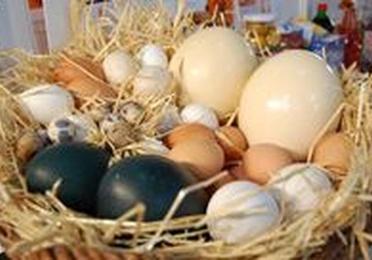 Huevo Pasteurizado