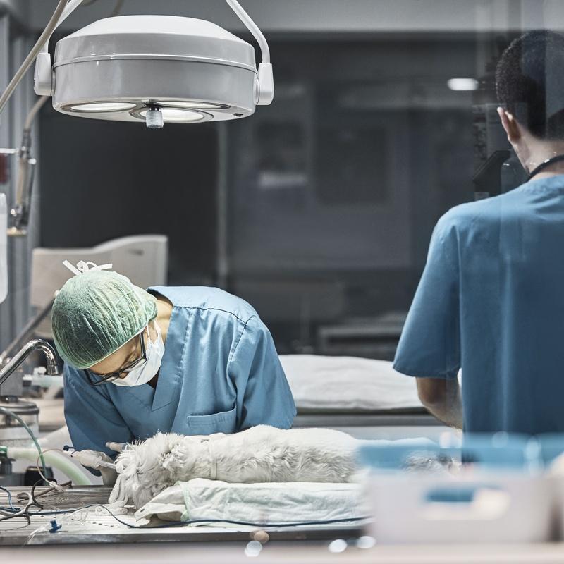 Cirugía: Servicios de Clinica Veterinaria Animalia