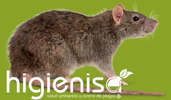 Eliminar ratas - Eliminar ratones en Alicante