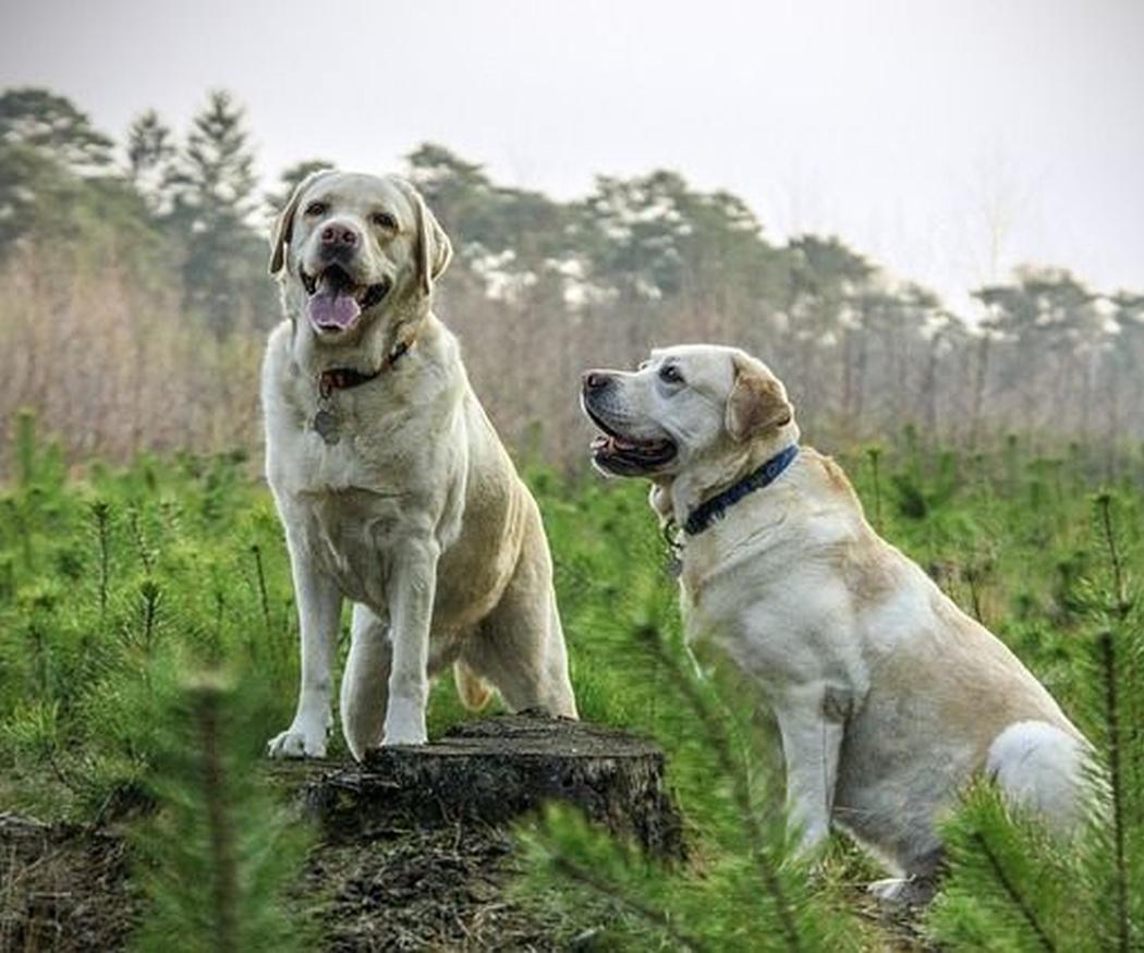 Los accesorios para ir al campo con tu perro