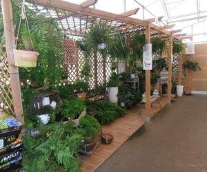 Proyectos de jardinería en Tenerife